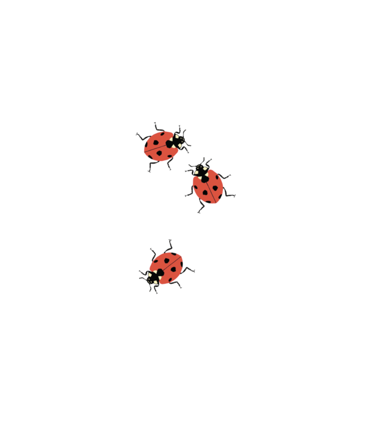 Tattoo Lady Bugs